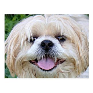 シーズー(犬)のTzuの幸せな顔! ポストカード