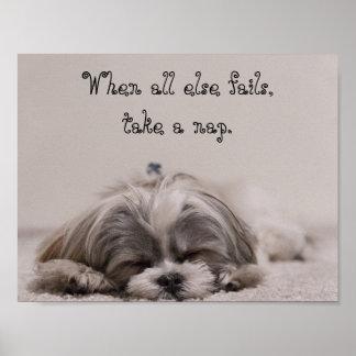 シーズー(犬)のTzuの昼寝 ポスター