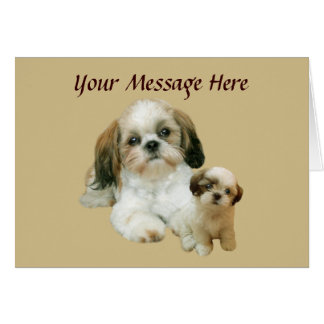 シーズー(犬)のTzuの相棒の挨拶状 カード