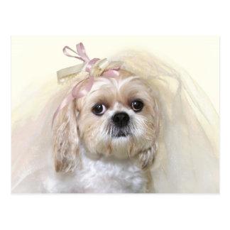 シーズー(犬)のTzuの花嫁 ポストカード