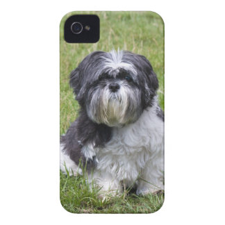 シーズー(犬)のTzu犬のかわいい写真のiphone 4ケースの仲間i/d Case-Mate iPhone 4 ケース
