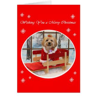 シーズー(犬)のTzu犬のクリスマスカード カード