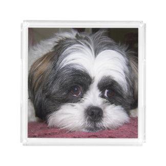 シーズー(犬)のTzu犬 アクリルトレー