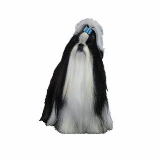 シーズー(犬) Tzu 写真彫刻(台付き)