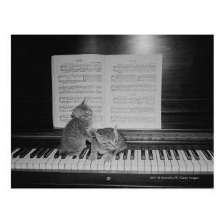 シートによってピアノキーボードに坐っている2匹の子ネコ ポストカード