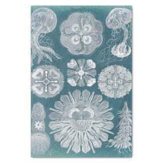 シーライフの青写真IV 薄葉紙