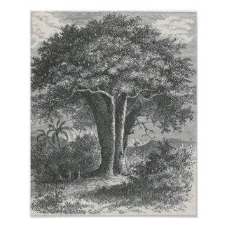 ジェームスJohonnot - Baobabの木 ポスター
