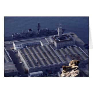 ジブラルタルのモンキービジネス カード