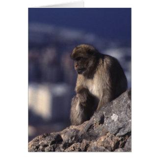 ジブラルタルの沈痛な猿 カード