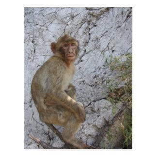 ジブラルタル猿の郵便はがきは、カスタマイズ ポストカード