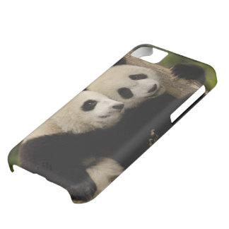 ジャイアントパンダのベビーのAiluropodaのmelanoleuca) 8 iPhone5Cケース