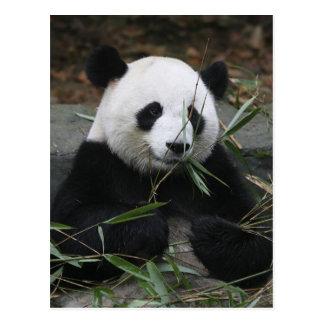 ジャイアントパンダの保護のジャイアントパンダ及び ポストカード