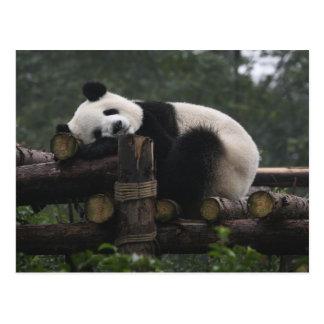 ジャイアントパンダの保護及び3時のジャイアントパンダ ポストカード