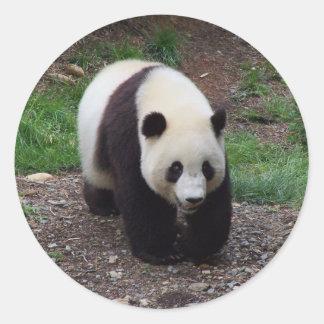 ジャイアントパンダの写真のステッカー ラウンドシール