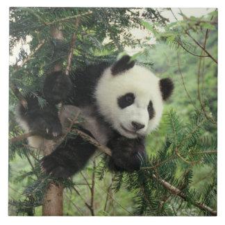 ジャイアントパンダの幼いこどもは木、Wolongの谷に上ります、 タイル
