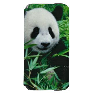 ジャイアントパンダの幼いこどもは薮のタケを食べます、 INCIPIO WATSON™ iPhone 6 ウォレットケース