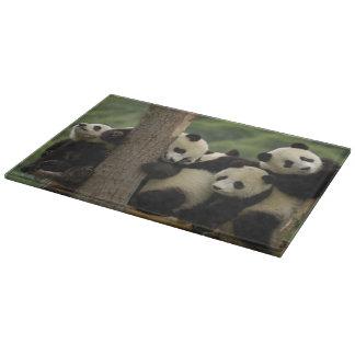 ジャイアントパンダの赤ん坊のAiluropodaのmelanoleuca) 4 カッティングボード