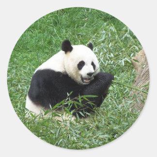 ジャイアントパンダの食べ物のタケ ラウンドシール