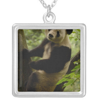 ジャイアントパンダのAiluropodaのmelanoleuca)家族: 3 シルバープレートネックレス