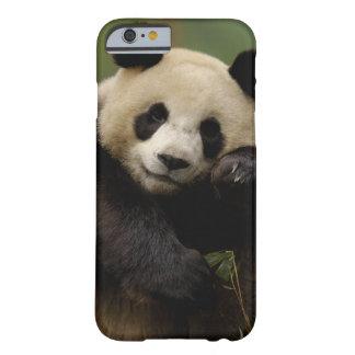 ジャイアントパンダのAiluropodaのmelanoleuca)家族: 4 Barely There iPhone 6 ケース