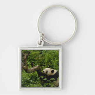 ジャイアントパンダのAiluropodaのmelanoleuca)家族: 8 キーホルダー