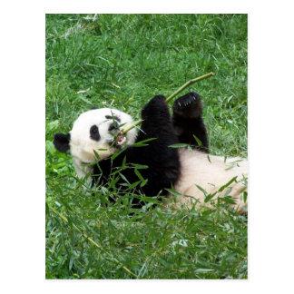 ジャイアントパンダのLounging食べ物のタケ ポストカード