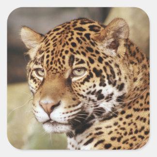 ジャガーのステッカー スクエアシール