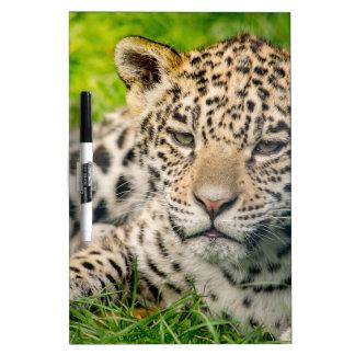 ジャガーの幼いこども ホワイトボード