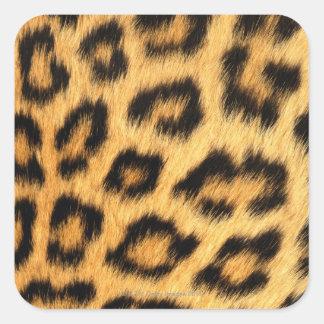 ジャガーの毛皮 スクエアシール