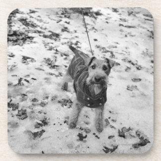 ジャケットを身に着けている犬 コースター