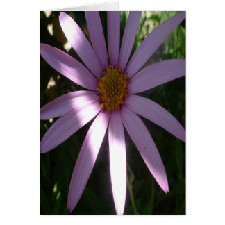 ジャッキーの紫色 カード