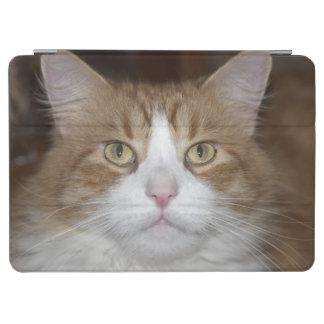 ジャックの国内オレンジおよび白いメインのあらいぐま猫 iPad AIR カバー