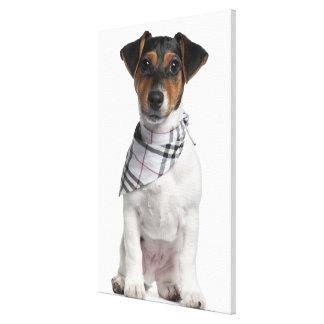ジャックラッセルテリアの子犬(4か月古い) キャンバスプリント