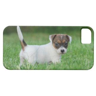 ジャックラッセルテリアの子犬 iPhone SE/5/5s ケース
