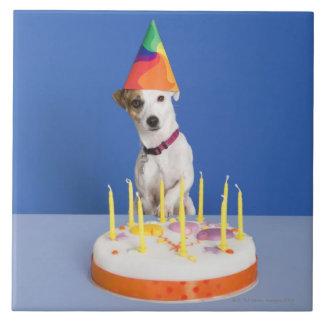 ジャックラッセルテリア犬の身に着けているパーティーの帽子 タイル