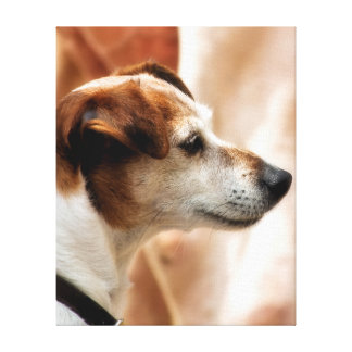 ジャックラッセルテリア犬 キャンバスプリント