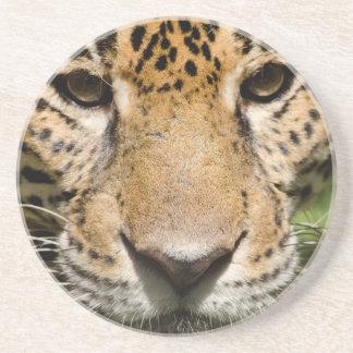 ジャングルのエンクロージャの捕虜のジャガー コースター