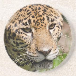 ジャングルのエンクロージャ2の捕虜のジャガー コースター