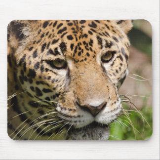 ジャングルのエンクロージャ2の捕虜のジャガー マウスパッド