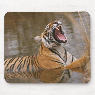 ジャングルの池であくびをしている王室のなベンガルトラ マウスパッド