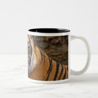 ジャングルの池の王室のなベンガルトラ、 ツートーンマグカップ