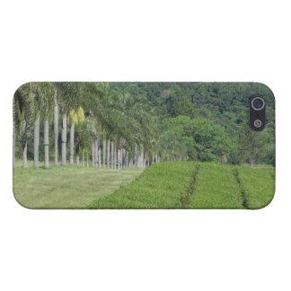 ジャングルの近くの茶農場 iPhone 5 カバー