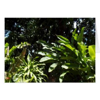 ジャングル道 カード
