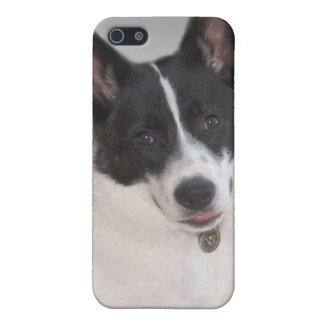 ジャーマン・シェパードかハスキーな白またはblk iPhone 5 ケース