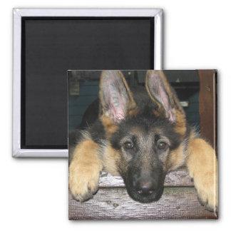 ジャーマン・シェパードの子犬の磁石 マグネット
