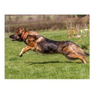 ジャーマン・シェパード犬のアルザス人を跳躍させる郵便はがき ポストカード