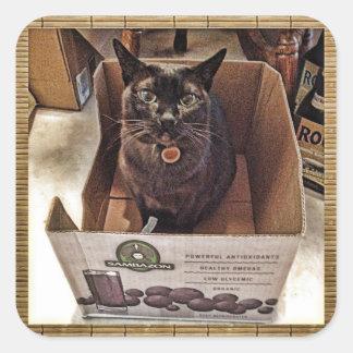 ジュース箱のビルマ猫 スクエアシール
