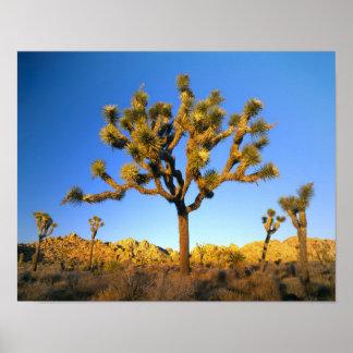 ジョシュアツリーの国立公園、カリフォルニア。 米国 ポスター