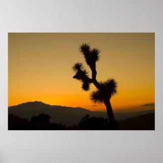 ジョシュアツリーの日没 ポスター