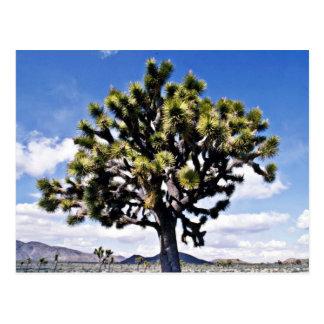 ジョシュアツリー-ジョシュアツリーの国立公園 ポストカード